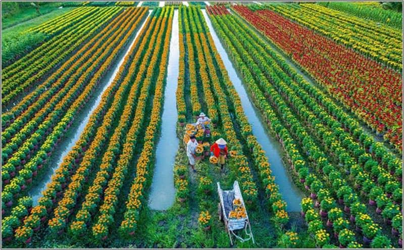 Điều Kiến Thiên Nhiên Phát Triển Farmstay