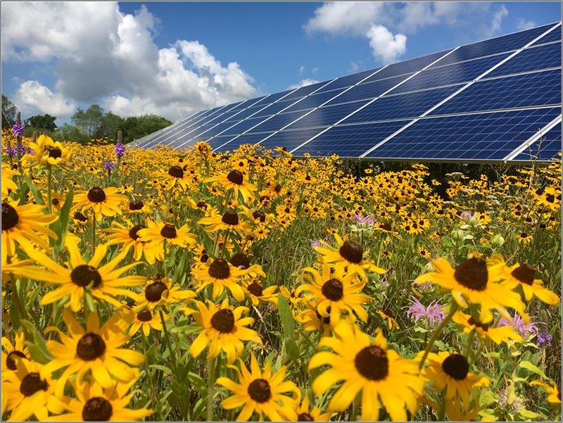 Dùng Điện Mặt Trời Cho Farmstay