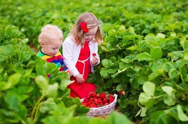 Farmstay Có Khải Là Du Lịch Nông Nghiệp