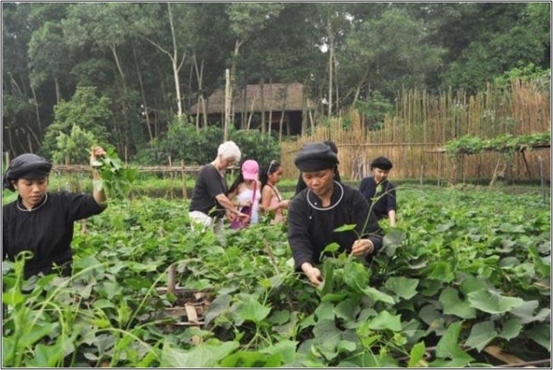 Mô Hình Farmstay Lồng Ghép Văn Hóa Bản Địa
