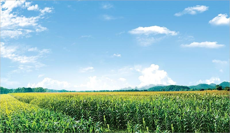 Việt Nam Phù Hợp Phát Triển Farmstay