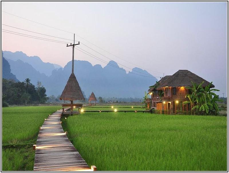 Cây Trồng Phù Hợp Farmstay Đồng Bằng